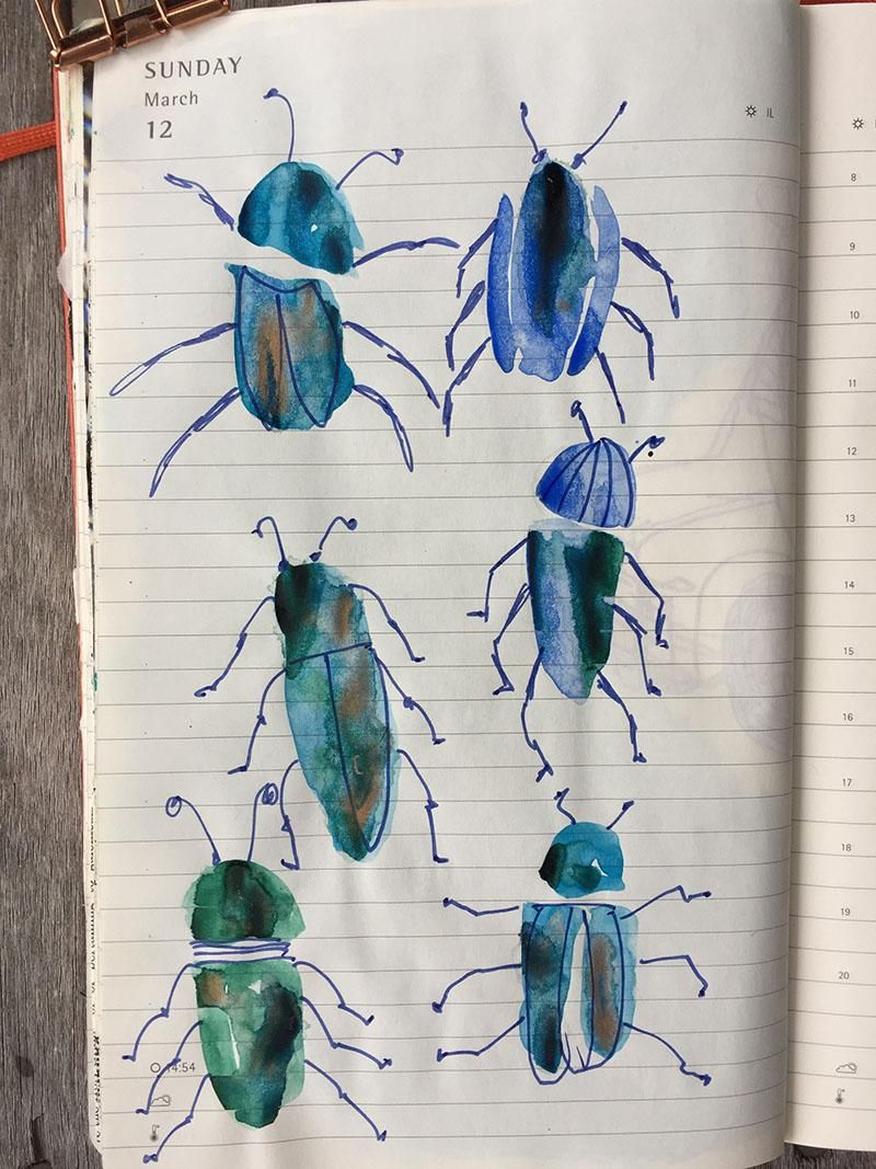 Beetles and butterflies - image 2 - student project