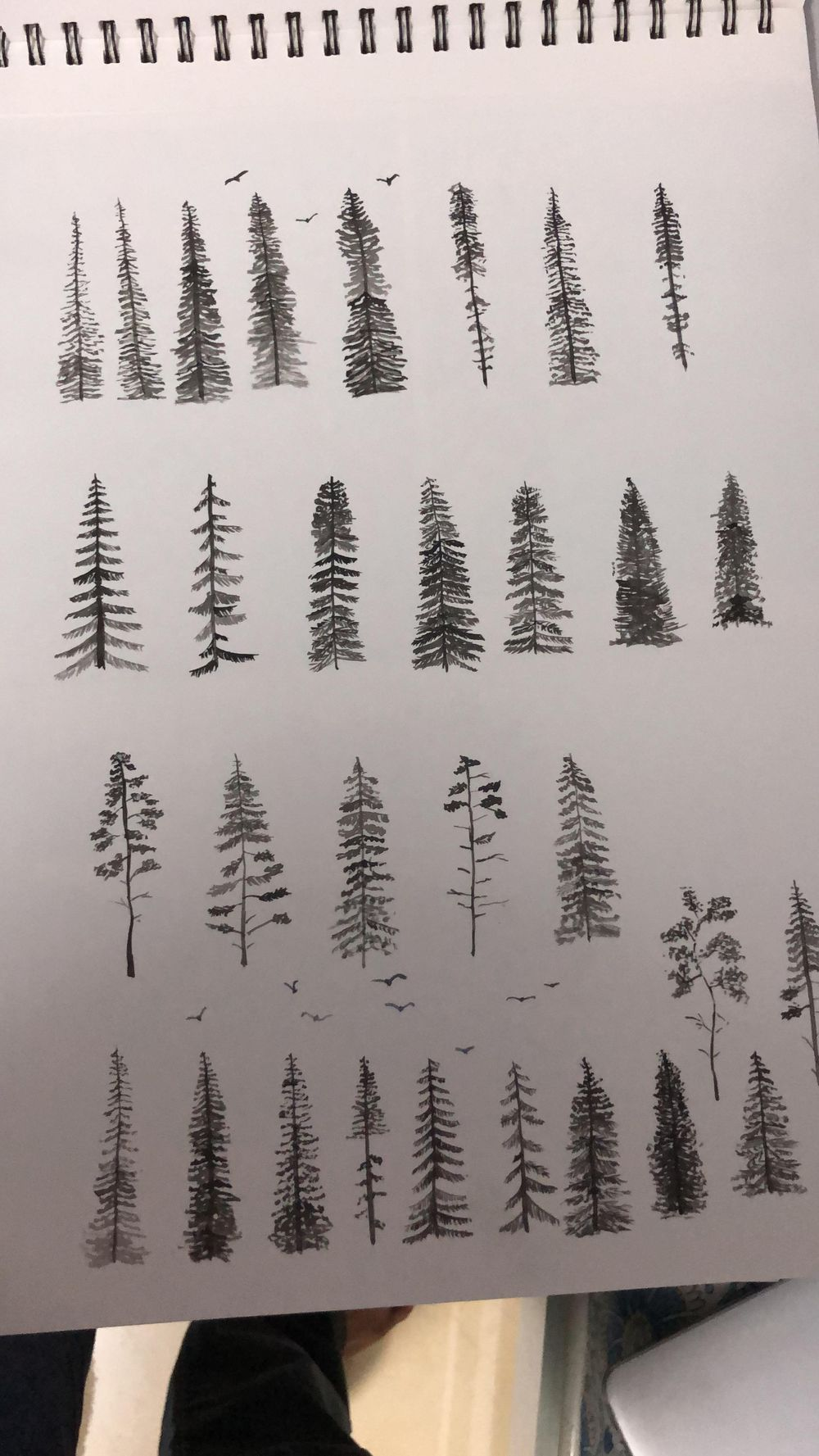 Pine trees - image 2 - student project