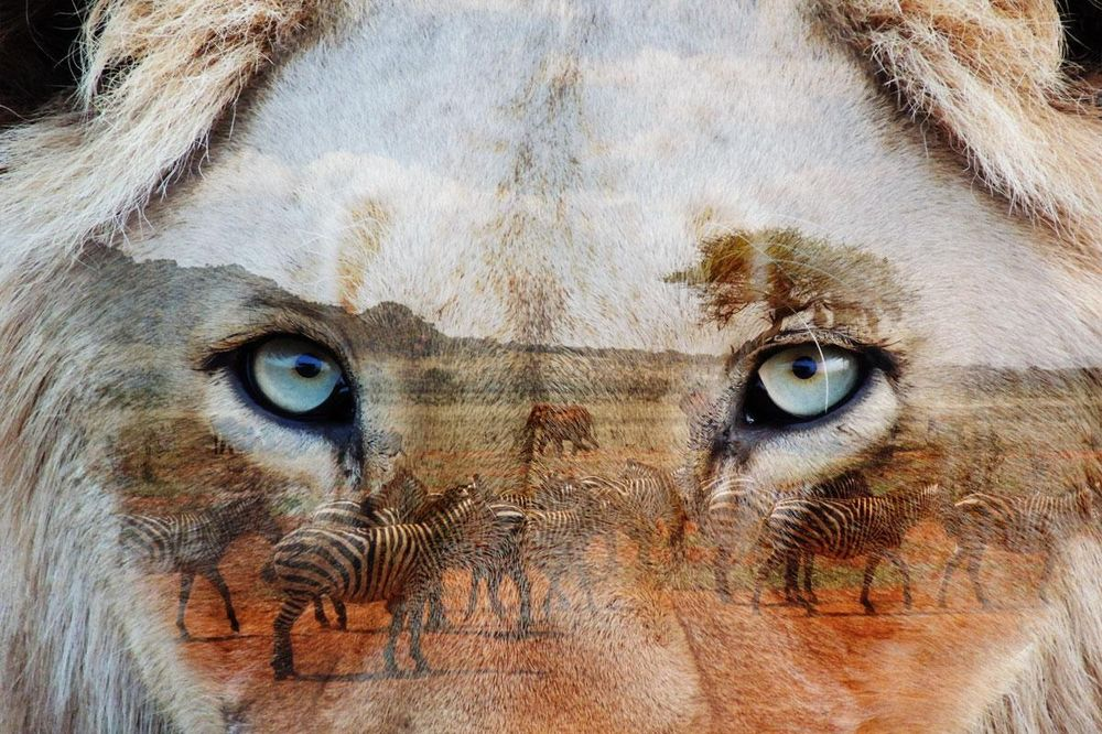 Content is King, but Lions rule the savana - image 1 - student project
