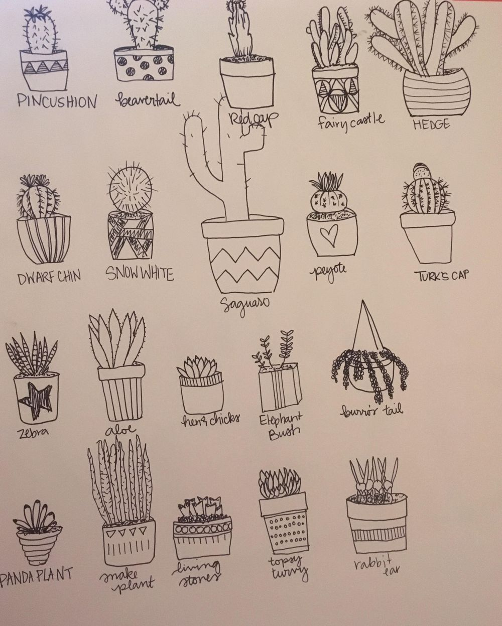 Cactus practice! (Haha, that rhymes.) - image 1 - student project