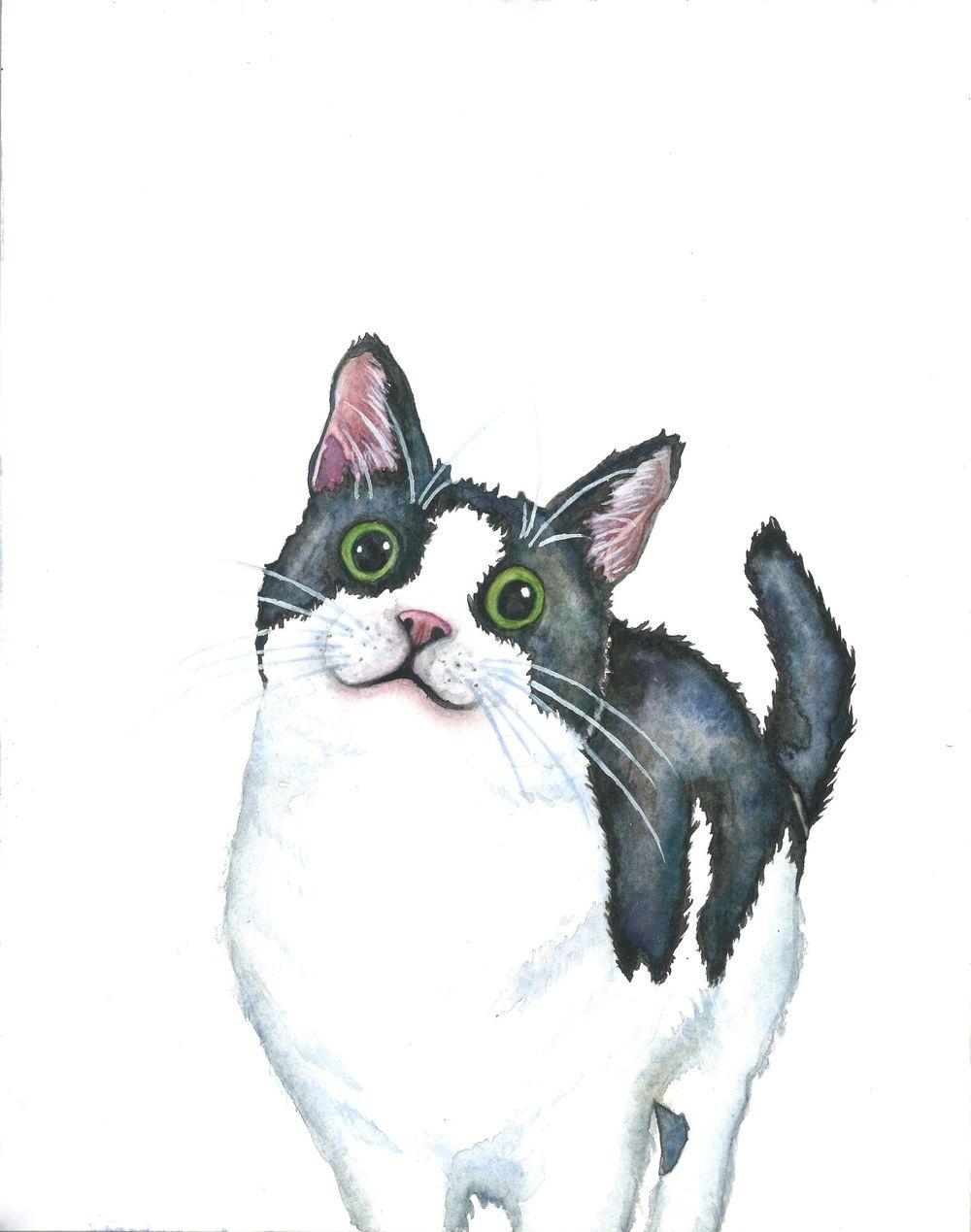 Cat Portraits! - image 1 - student project