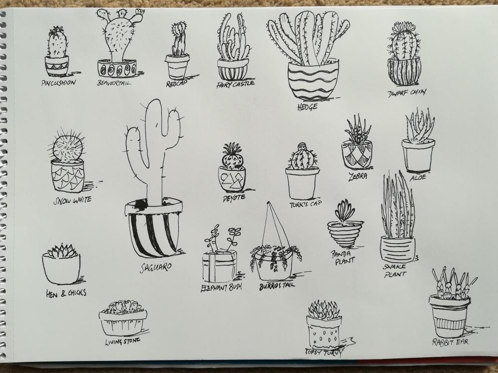Starting with succulents - image 1 - student project