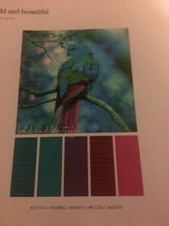 My two lovely color schemes - image 3 - student project