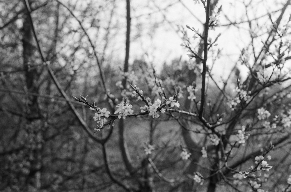 Black and white photos - image 2 - student project