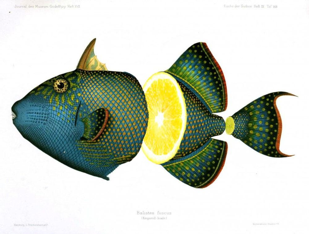 Photoshop: Fruity fish collage - image 1 - student project