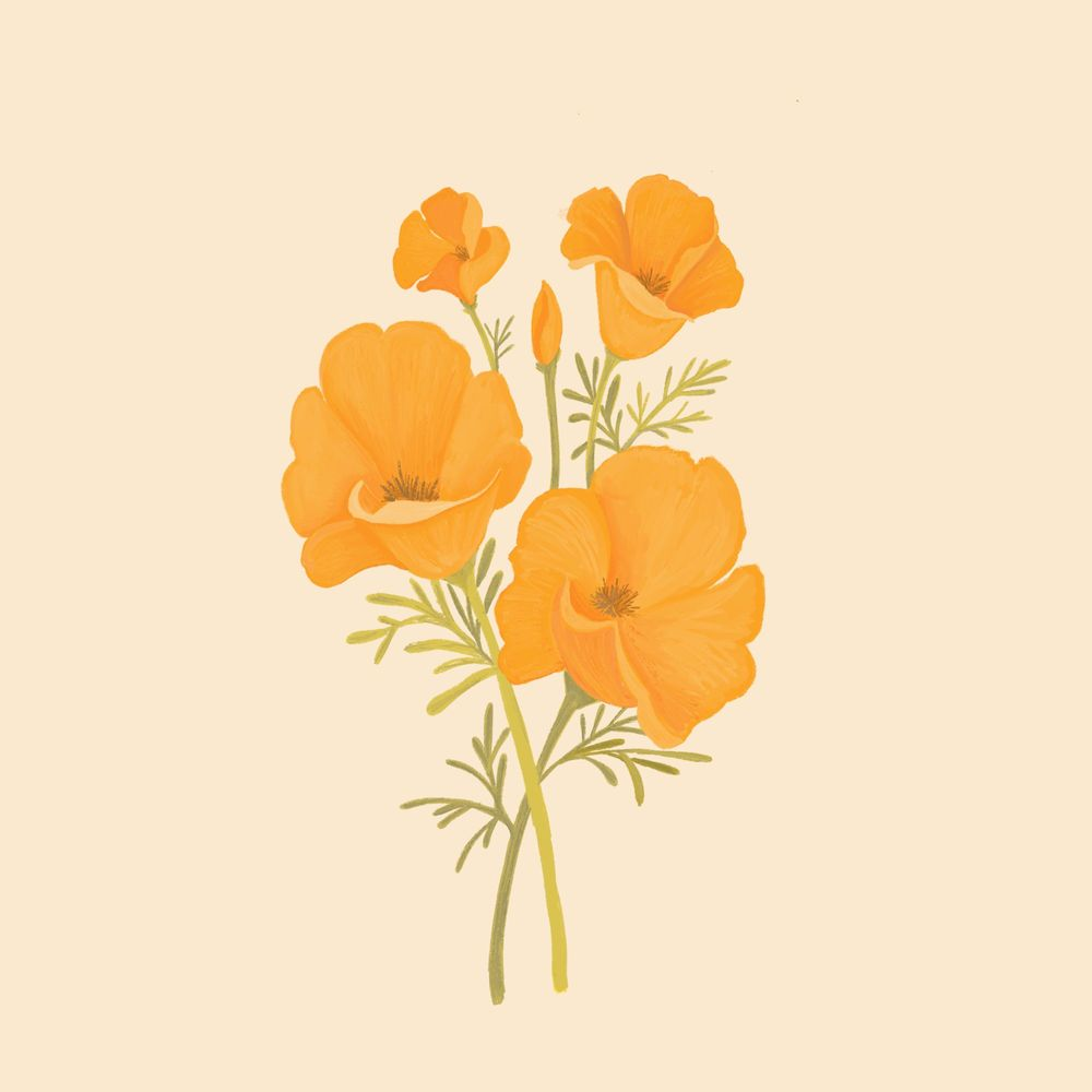 California Poppies - image 1 - student project