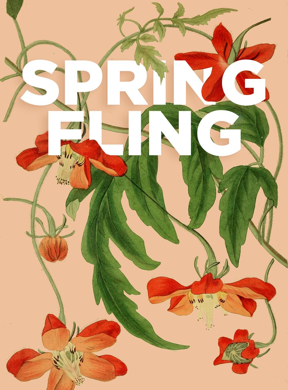 Spring Fling - image 4 - student project