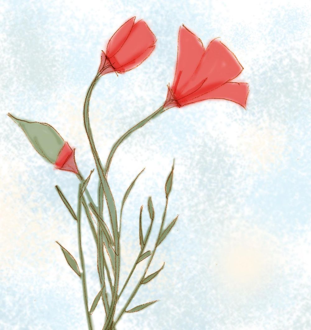 Colored Sketch - Poppies - image 1 - student project