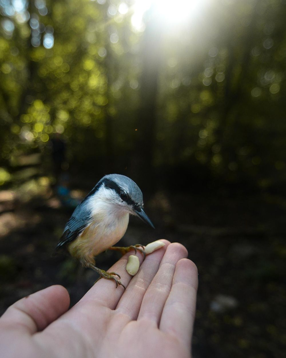 Getting up close with the animals. - image 6 - student project