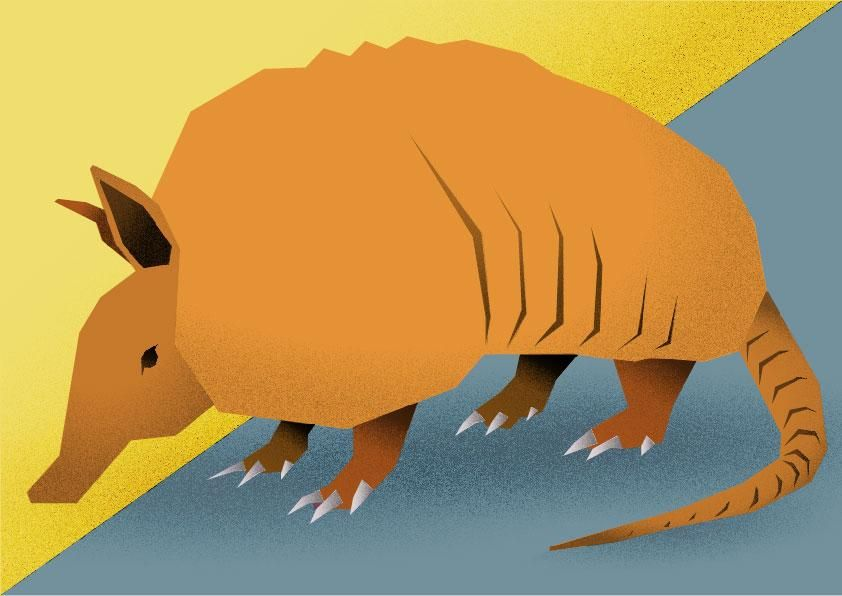 Armadillo - image 4 - student project