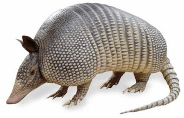 Armadillo - image 1 - student project