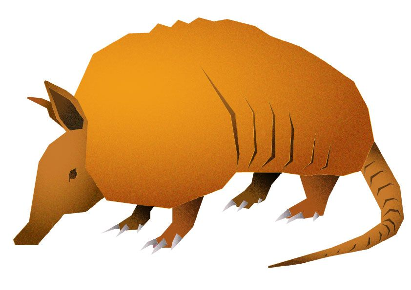 Armadillo - image 3 - student project