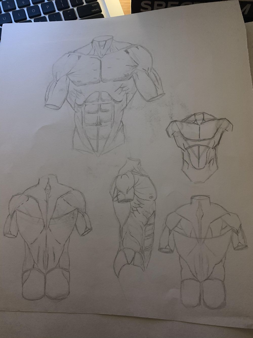 Torso Drawings - image 1 - student project