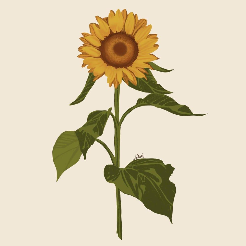 Sunflower procreate - image 1 - student project