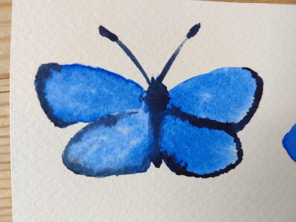 Simple Butterflyes - image 2 - student project