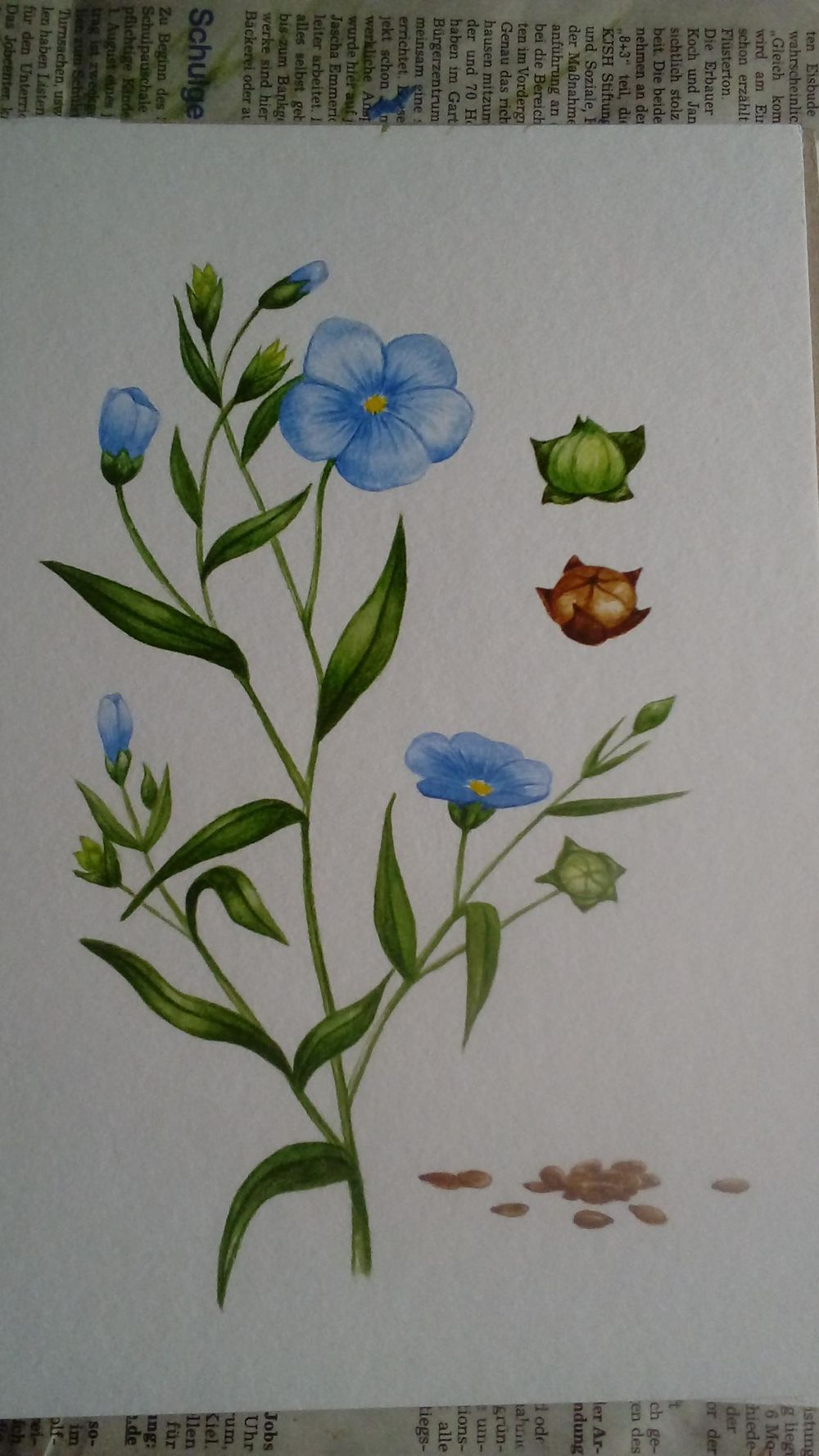 Linseed illustration - image 2 - student project