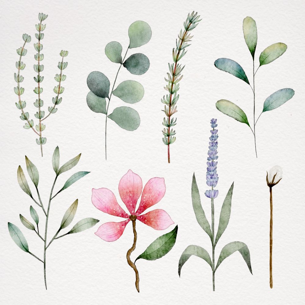 Botanical watercolor - image 1 - student project