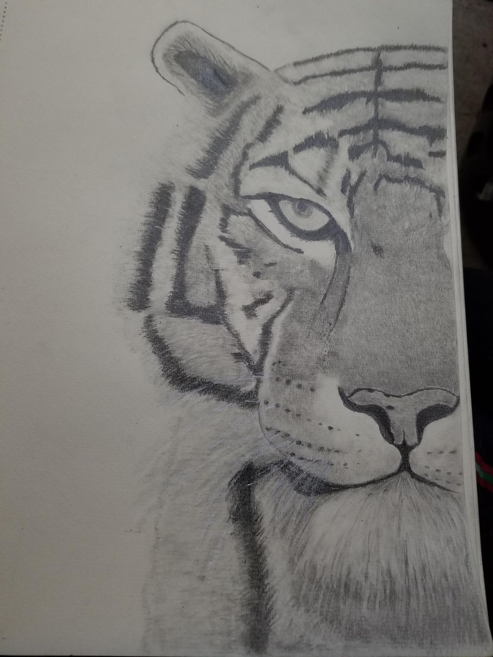 kitty graphite pencil - image 1 - student project