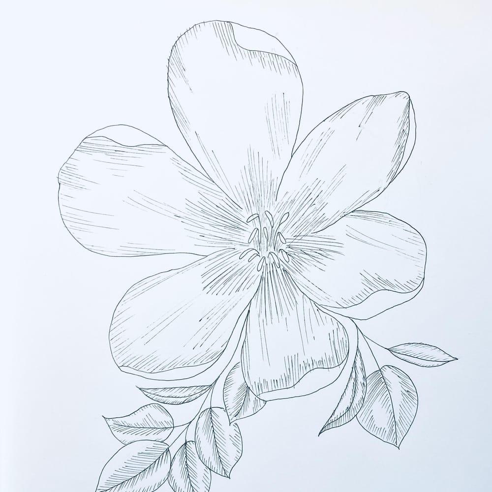 Zendoodle - Florals - image 1 - student project