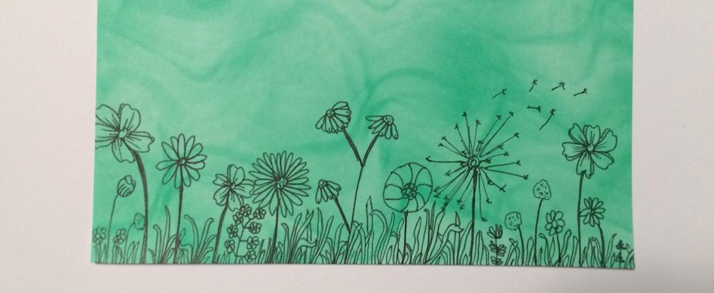 Botanical line drawings - image 2 - student project