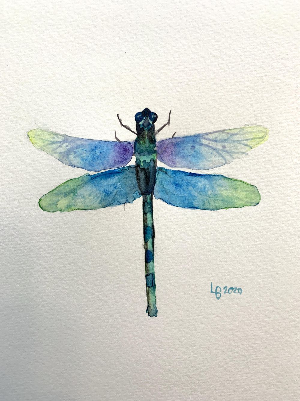 Dragonfly Process - image 4 - student project