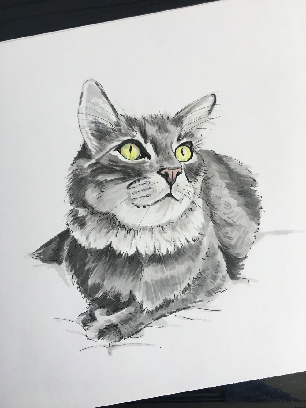 Grey Cat - image 1 - student project