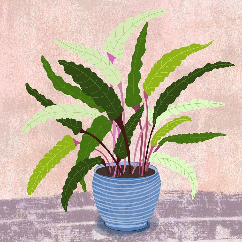 Wavestar Potted Plant - image 1 - student project