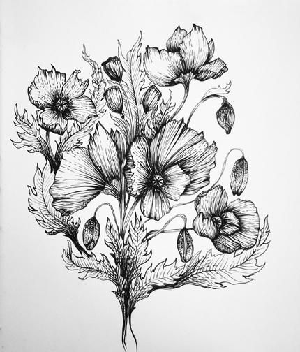 Pen and Ink Poppies - image 1 - student project