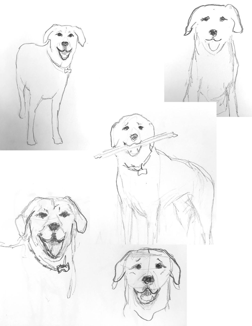 Illustrate From Sketches (3 patterns in 3 weeks) - image 1 - student project