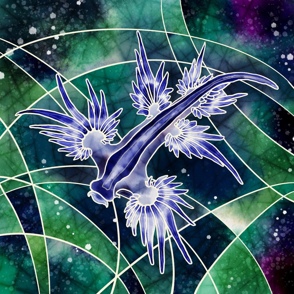 Glaucus Atlanticus - image 1 - student project