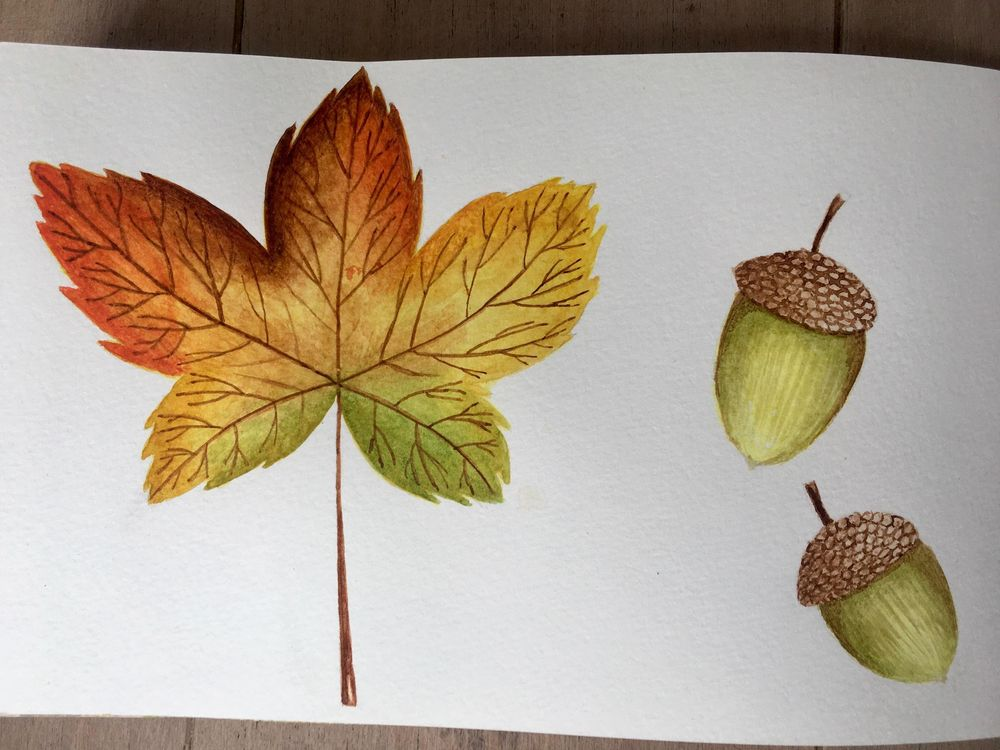 Autumn sketchbook - image 1 - student project