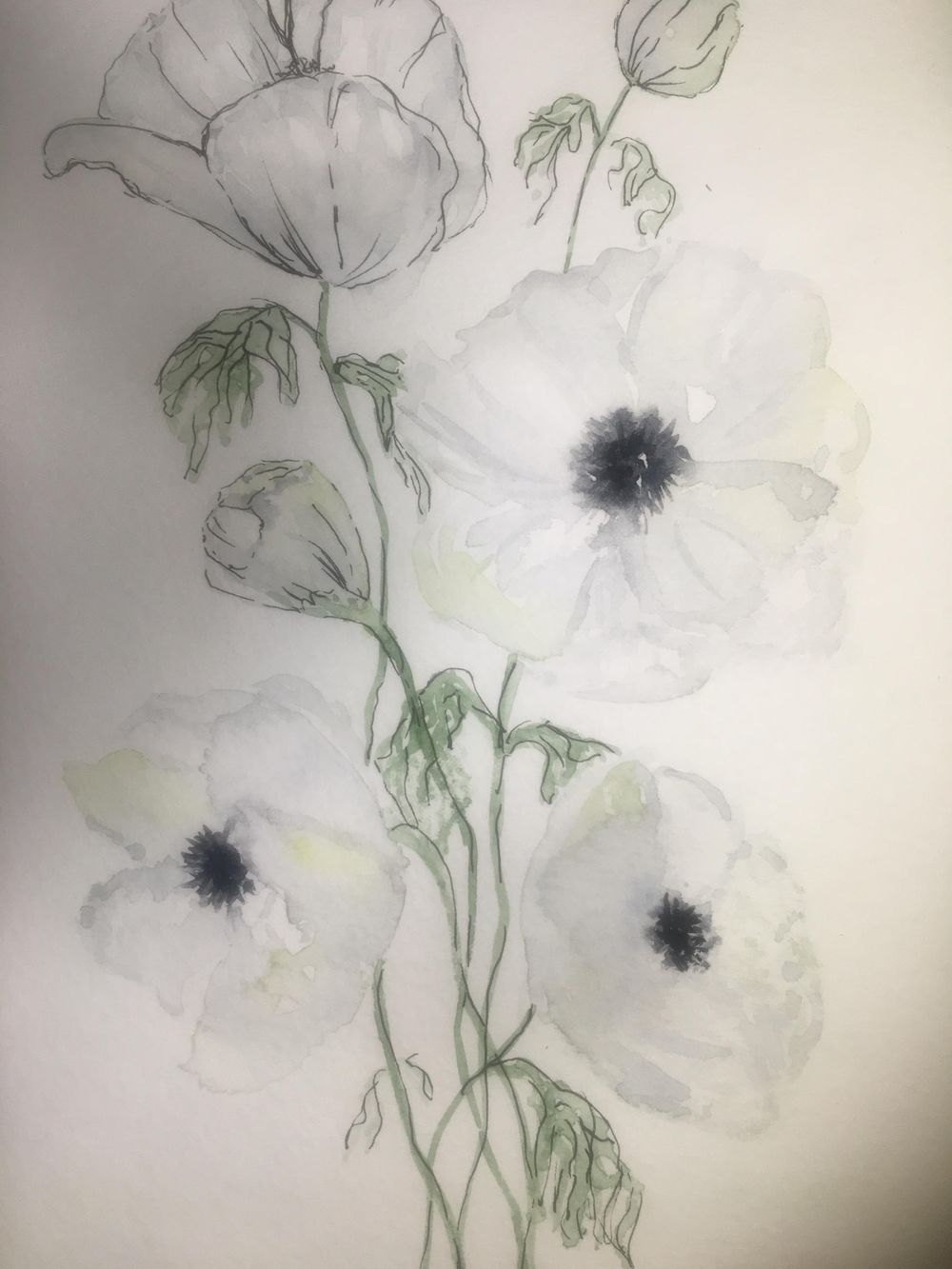 White watercolour & ink anemones - image 1 - student project