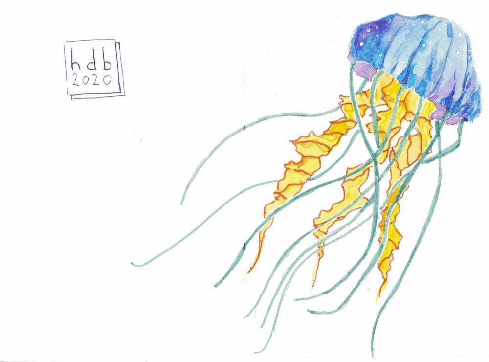 jellyfish postcards - image 1 - student project
