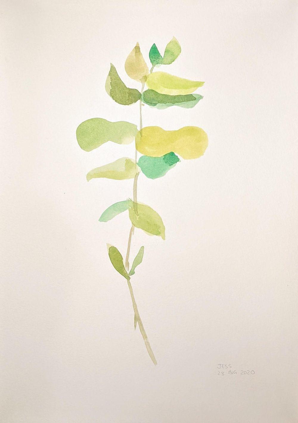 Eucalyptus watercolour - image 1 - student project