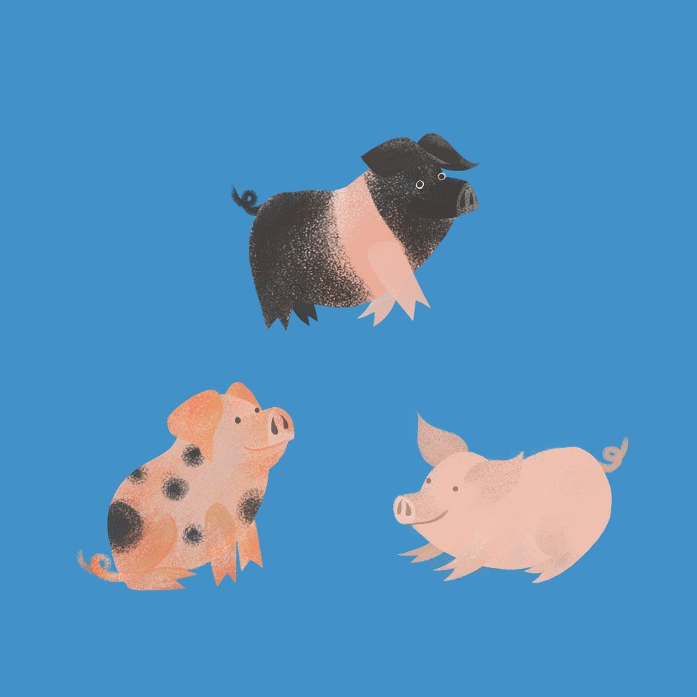 Three Little Pigs - image 1 - student project