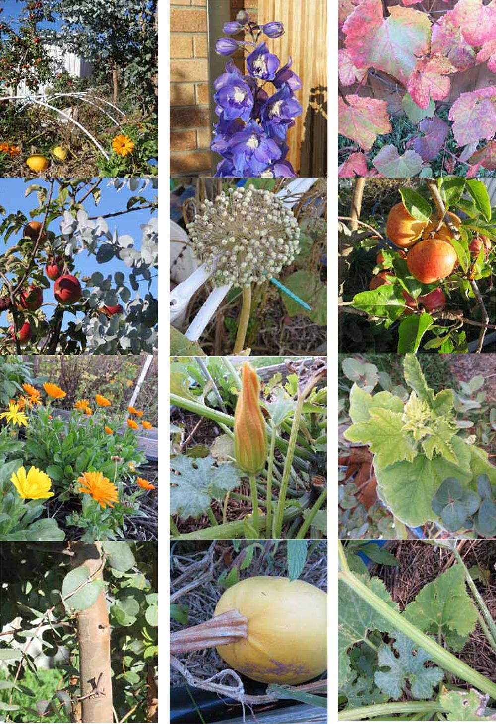 Autumn Garden 2019 - image 1 - student project