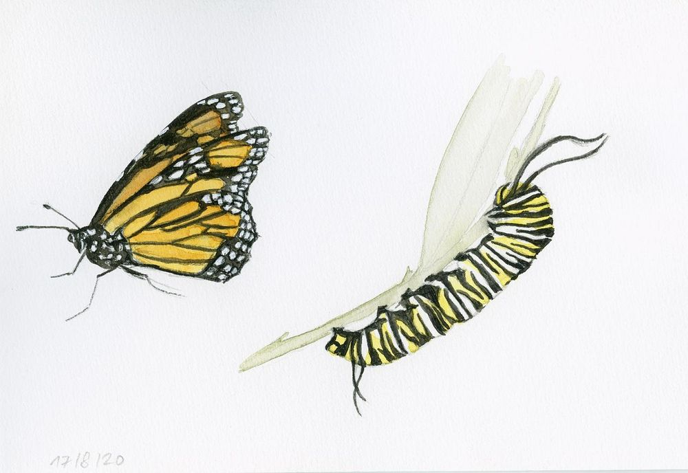 Drawing And Painting Butterflies - image 4 - student project