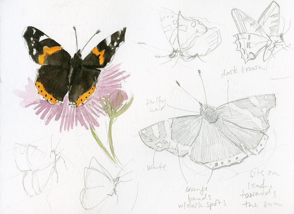 Drawing And Painting Butterflies - image 3 - student project