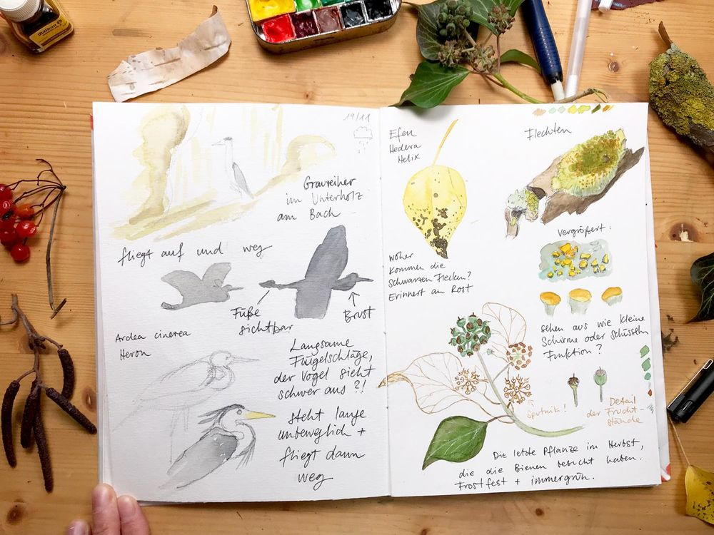 My nature sketchbook - image 1 - student project