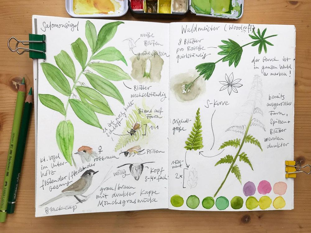 Nature Journaling Ideas For Spring - image 1 - student project