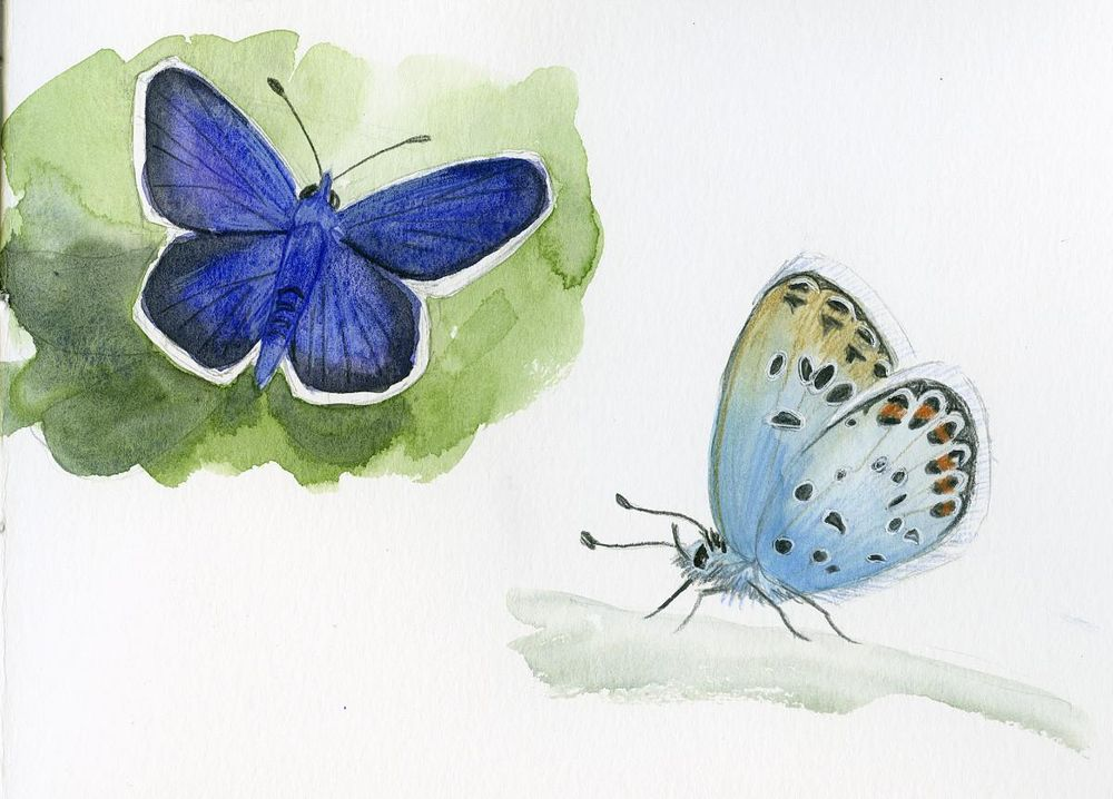 Drawing And Painting Butterflies - image 2 - student project