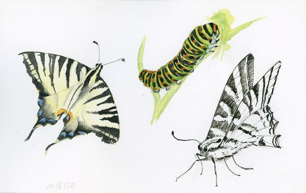 Drawing And Painting Butterflies - image 5 - student project