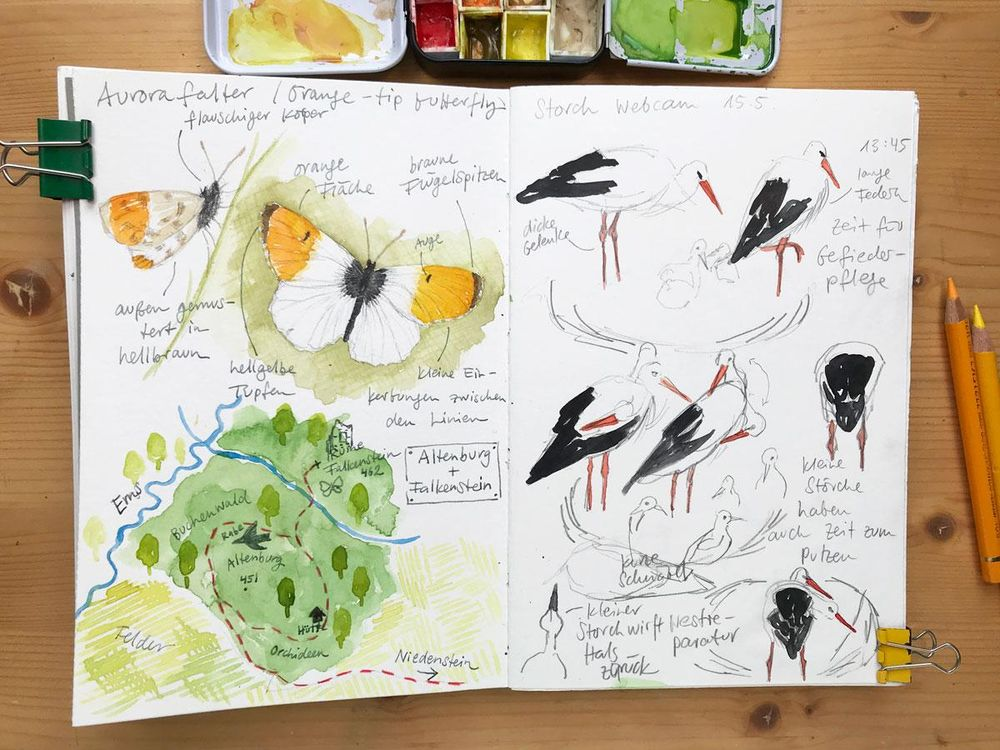 Nature Journaling Ideas For Spring - image 2 - student project