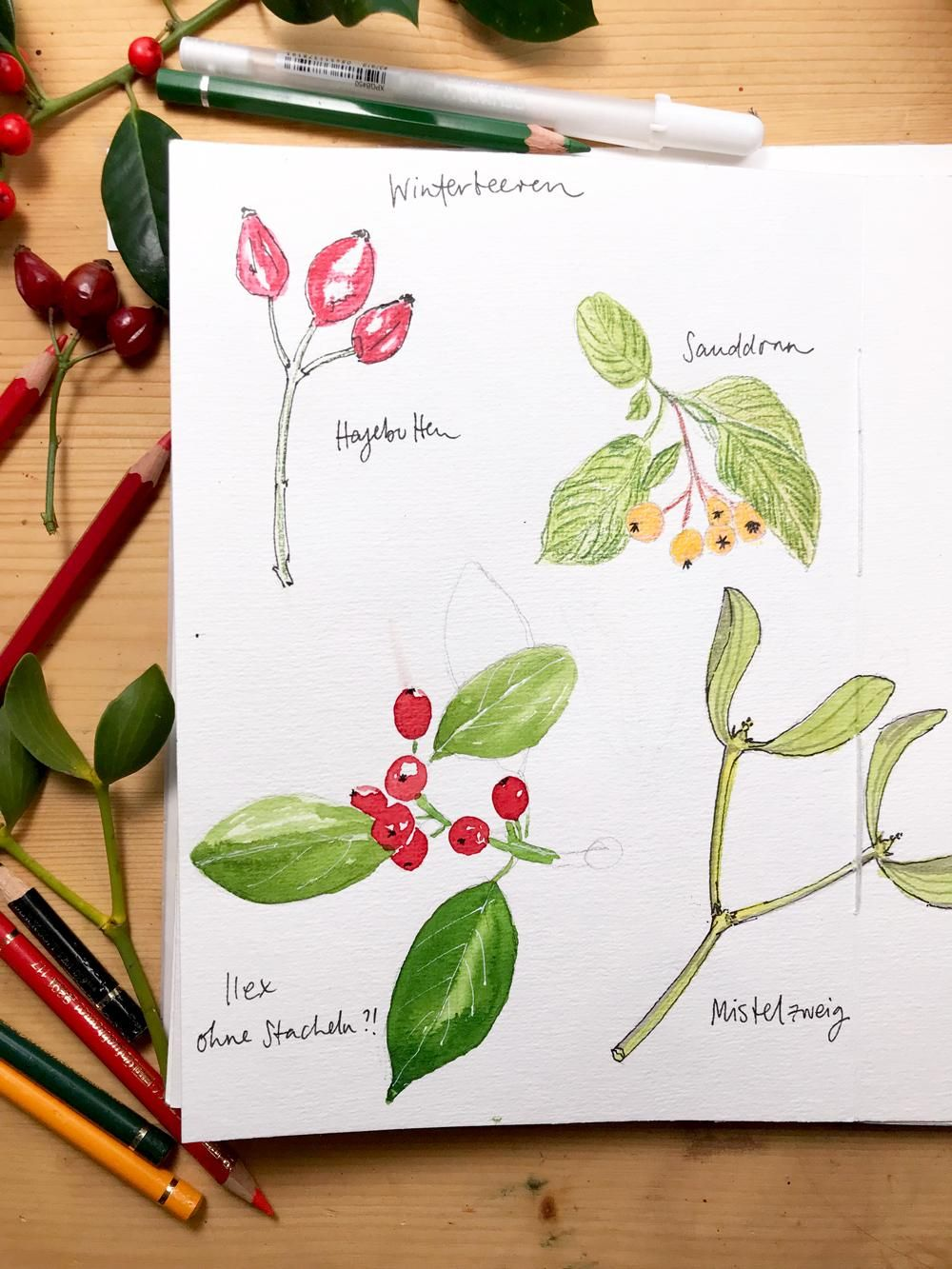 My nature sketchbook - image 2 - student project