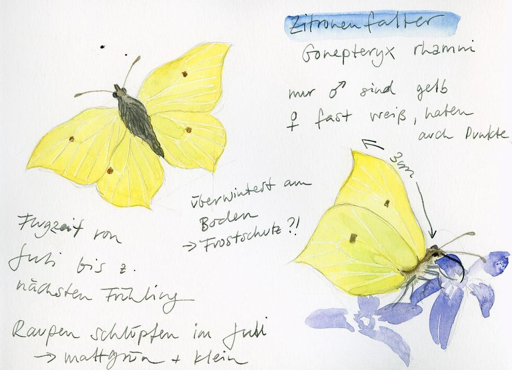 Drawing And Painting Butterflies - image 1 - student project