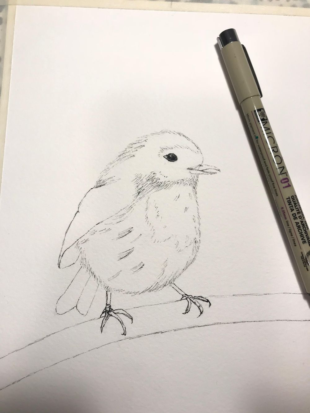 Basic Watercolor & Ink Illustration: Songbirds - image 2 - student project