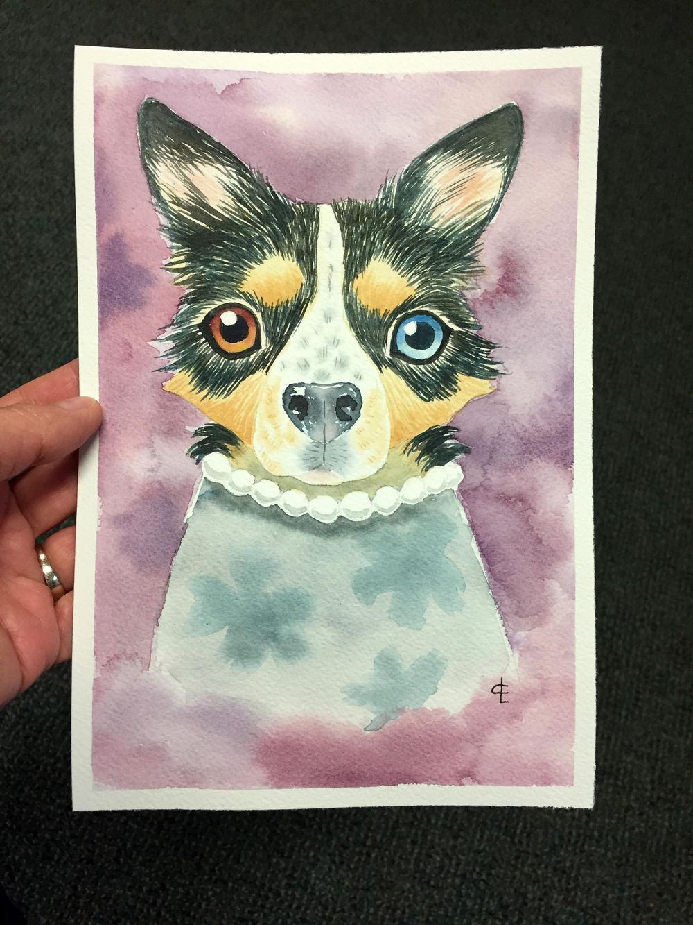 My Dog: Boo - image 3 - student project