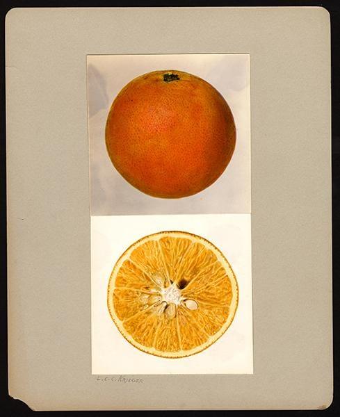 Orange - image 1 - student project