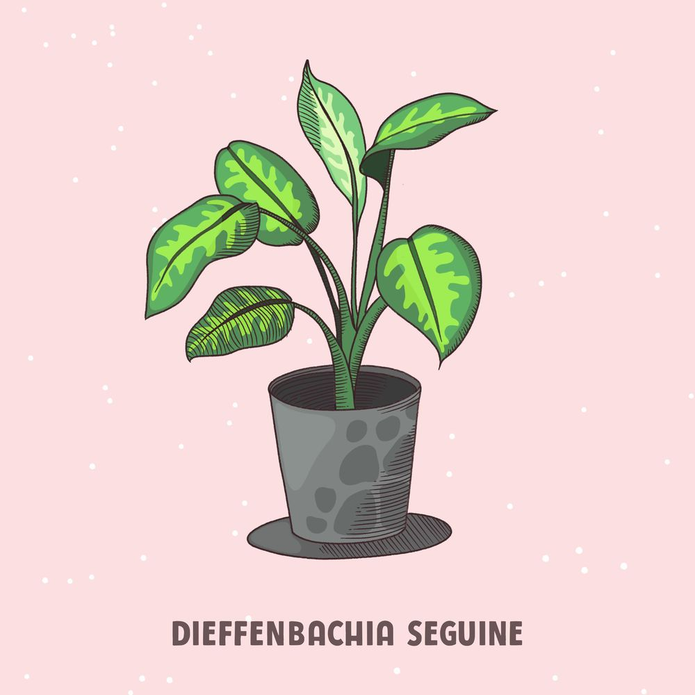 House plant - image 3 - student project