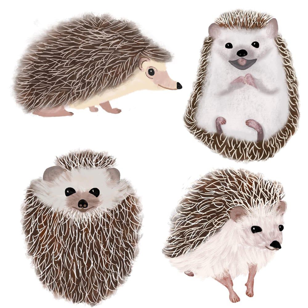 Rachel's Hedgehogs - image 1 - student project